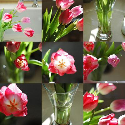 Tulipcollage